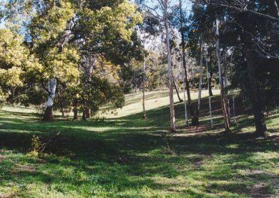 open_woodland