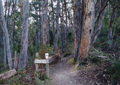 stringyback_forest