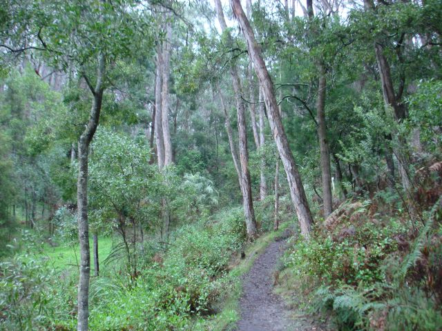 Stringybark forest